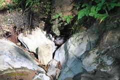 Groundhog Near Cave Entrance (wrcochran) Tags: nature vertical skyline underground alabama caves caving cavern sinkhole speleo spelunking jacksoncounty nss