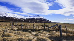 Spring pastures for Icelandic horses - HFF! (lunaryuna) Tags: light sky panorama clouds season landscape coast iceland spring fences textures driftwood pastures lunaryuna cloudscape mountainrange hff boggrass northiceland seasonalchange fencefriday northfjords