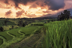 Bali - Rice Terraces (claudecastor) Tags: travel sunset bali rot nature sunrise indonesia landscape asia asien southeastasia sdostasien sonnenuntergang rice terrace natur terraces reis ricefield landschaft sonnenaufgang indonesien reisfeld reise terrassen jatiluwih