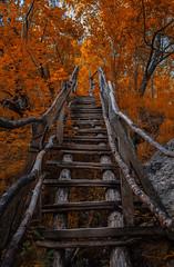 Autumn in june (mariazaharievaPH) Tags: wood bridge autumn trees summer orange color nature june outdoor bulgaria