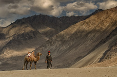 Ladkah and Kashmir (17 of 64) (naomipics) Tags: bactrian camels nubra ladakh matchpointwinner mpt503