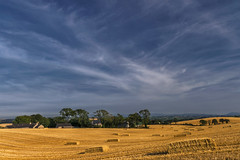 Straw in Squares (Alan10eden) Tags: straw bales stubble harvest grain cereal winterbarley view sunshine farm farmer crop grow field bluesky scarva alanhopps agriculture northernireland ulster canon 80d polarizer sigma 1770mm wideangle