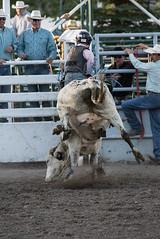 Tak_CPRA_2016-4860 (takahashi.blair) Tags: coachtak rodeo blairtakahashitakahashiblaircoachtakblairtakahashi pincher creek barrel racing bronc rope bareback steer bullriding