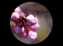 Flowering (karakutaia) Tags: sun tree love nature japan paper temple tokyo heart afotando flickraward flickrglobal allbeautifulshotsandmanymoreilovenature flowerstampblackandwhite transeguzkilorestreetarturbanagreatshotthisisexcellentcontestmovementricohgxrserendipitygroupbluenatureicapturecardjapanesepapercardflickraward5jtrasognoerealtabstractelementsorganizersimplysuperb
