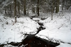 Tiny brook in a depression in spruce forest, east of Hauklampi (Espoo, 20120107) (RainoL) Tags: winter snow forest espoo finland geotagged january u brook fin nuuksio 2012 uusimaa nyland esbo hauklampi 201201 20120107 geo:lat=6029165600 geo:lon=2461130500 brooksofnuuksio