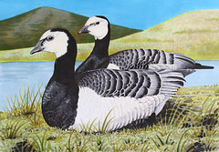 """Artwork """"Barnacles"""" 2015 (Wild Chroma) Tags: art nature birds animal illustration geese artwork drawing wildlife gouache markers letraset tria"""