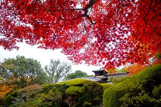 紅葉 - 詩仙堂 丈山寺 / Shisendo - Jyozan-ji Temple