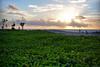 Green by the sea, Segara Kuta Bali (eduardopradana) Tags: sunset bali beach kuta segara