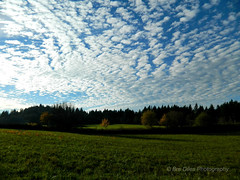 Beautiful Cloudy Day (breanne.diles) Tags: blue trees white green beautiful field grass yellow clouds washington pattern northwest hiking patterns property land washingtonstate treeline pnw pinetrees forestgreen