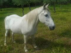 Granadilla, Cáceres (Rosaternero) Tags: naturaleza fauna rural caballo spain pueblo ruinas ganado turismo cáceres granadilla vegetación extremadura geografíahumana
