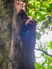 """La Réserve de Monteverde: un Quetzal Resplendissant femelle. La journée se termine merveilleusement bien ! <a style=""""margin-left:10px; font-size:0.8em;"""" href=""""http://www.flickr.com/photos/127723101@N04/26671942250/"""" target=""""_blank"""">@flickr</a>"""