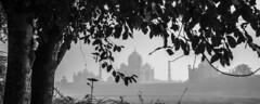 Taj (ayashok photography) Tags: bw india monument asian blackwhite nikon asia emotion indian husband taj tajmahal agra bnw bharat bharath desh barat shahjahan cwc uttarpradesh yamuna barath mugal 2013 mumtaj shajahan ayashok nikond700 tokina1735mm chennaiweekendclickers ayashokphotography mehtabbaghgarden agraday10711 architectustadahmadlahauri