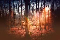 Autumn Sunset (KJ Photographie) Tags: autumn light leaves misty forest germany licht nikon sonnenuntergang herbst sonne wald bagno bume sonnenaufgang baum sonnenstrahlen lightroom steinfurt sonnenschein herbstfarben burgsteinfurt blumenundpflanzen
