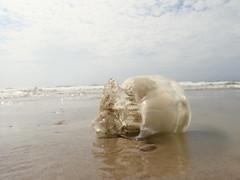 Jellyfish (therealjoeo) Tags: summer vacation beach texas corpuschristi shore padreisland