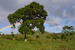 005-002 rvores e paisagem (agnaldo.severo) Tags: iris verde paisagem cu e nuvem arco rvores