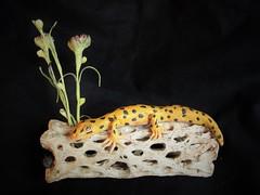 Leopard Gecko on a log.... (ElementalDragons) Tags: handmade lizard polymerclay clay gecko etsy leopardgecko elementaldragons claylizard claygecko