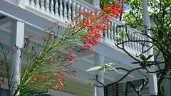 Key West, FL (SomePhotosTakenByMe) Tags: city red vacation usa holiday plant flower building rot america keys island flora unitedstates florida balcony balkon urlaub pflanze insel stadt keywest amerika blume gebäude floridakeys