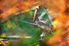 Pelicano (Diez Visualcreativo) Tags: chile digital photoshop zoo foto arte alejandro pintura bote buin pelicano diez photoshopcreativo visualcreativo
