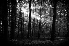 ...division... (lux/us) Tags: blackandwhite baum bw availablelight angle abstract abstrakt wald forest licht light schwarzweiss sony rx100 composition captureenhancement focus