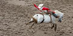 ajbaxter160717-0120 (Calgary Stampede Images) Tags: calgarystampede 2016 rodeo alberta canada ajbaxter allanbaxter