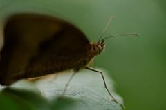 In my garden #2 (paflechien33) Tags: macro nature nikon 58mm helios d800 442
