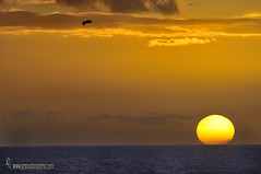 Salida-del-sol-hora-dorada en Calahonda (Motril) (Lucas Gutirrez) Tags: amanecer salidadelsol calahonda costatropical motril granada landscapes marinas amacecer sol granadanatural