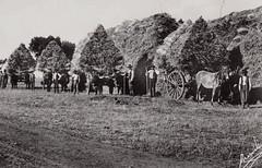 Era uma vez em Portugal... ( Portimagem) Tags: portugal cavalos historia vianadocastelo camponesa patrimnionacional