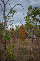 Termite Mounds Northern Territory