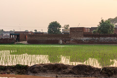 0W6A7155 (Liaqat Ali Vance) Tags: village reflection view landscape people google gujranwala saharan chatha liaqat ali vance photography punjab pakistan