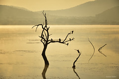 Yellow morning, Mankwe Dam, Pilanesberg National Park, South Africa (Sumarie Slabber) Tags: dam silhouettes birds gold mist water morning glowing nature landscape sumarieslabber hills southafrica northwest pilanesberg mankwe outdoor