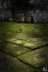 Musgo y ladrillos (ainelucero) Tags: ladrillo camino musgo verde argentina