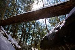 Down Under (cara zimmerman) Tags: trees forest log indiana turkeyrun turkeyrunstatepark