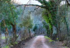 road in the woods (lotti roberto) Tags: montioni toscana tuscany woods bosco inverno winter tree fav25 fav50 fav75