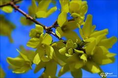 PETALES ET COULEURS (Gilles Poyet photographies) Tags: nature fleurs soe auvergne beaumont puydedme autofocus aplusphoto artofimages rememberthatmomentlevel1