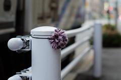 (  / Yorozuna) Tags: japan tokyo guardrail rubberband hairband accessory hairelastic    hairaccessory hairtie  lostarticle   shinjukuward    wakamatsucho    wakamatsukawada  pentaxautotakumar55mmf18
