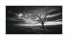 Last Light... (untiedshoes1) Tags: longexposure trees light sunset blackandwhite bw motion tree nature weather clouds alone bare rustic northumberland fields weathered lonely toned desolate craigrichards d800e