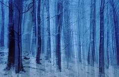 20150125-007F (m-klueber.de) Tags: schnee winter berge wald hohe rhn 2015 schwarze farnsberg mehrfachbelichtung hochrhn mkbildkatalog 20150125 20150125007f