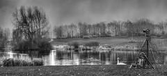 Never a dull day (cris.gerrard) Tags: camera blackandwhite mono swan pond miltonkeynes tripod willow backpack campbellpark