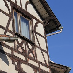 ... and a little bird in the gutter. (:Linda:) Tags: house abandoned window germany town decay bluesky thuringia halftimbered fachwerk historismus themar andreaskreuz historicism