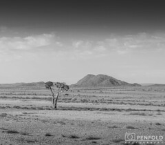 Desolate Quiver (chrispenfold) Tags: africa tree desert south afrika wilderness desolate arid tundra sud afrique quiver cederberg