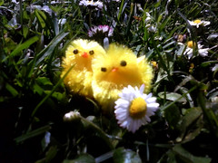 easter 2015 (seanfderry-studenna) Tags: pink blue orange holiday plant color green nature floral field grass yellow festival easter season spring flora colorful background space painted traditional border seasonal egg decoration row fresh celebration hidden hide eggs tradition decorated decoupage