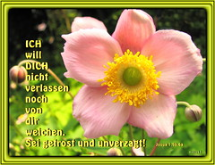 Sei getrost und unverzagt 4 / Be strong and courageous 4 (Martin Volpert) Tags: flower fleur christ god blossom faith flor blossoms pflanze blumen lord bible blomma christianity blume bibbia fiore blte herr blomst scripture virg scriptures lore biblia bloem gott blm iek floro kwiat flos holyspirit ciuri bijbel kvet kukka cvijet flouer glauben christentum bibleverses blth jesuschristus heiligergeist cvet zieds is floare blome iedas bibelverskarte mavo43 lovetruth