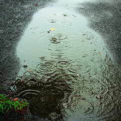 =Appearance of water-120Birth of life with the rain (kouichi_zen) Tags: city black nature water rain circle ripple ground