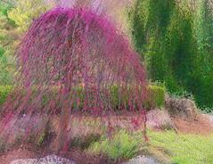 Little Pink Tree (bethrosengard) Tags: photomanipulation digitalart photoart digitallyenhanced digitalmagic bethrosengard
