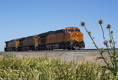 Thorny Subject (Patrick Dirden) Tags: california railroad northerncalifornia train weed diesel thistle engine rail locomotive ge stockton bnsf centralvalley generalelectric sanjoaquinvalley stocktonca burlingtonnorthernsantafe tier4 sanjoaquincounty bnsfrailway bnsfrailroad burlingtonnorthernsantaferailroad californiathistle bnsfstocktonsub et44c4 bnsf3872