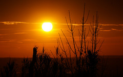 Cactus (Raphael Belliot) Tags: sunset sky sun sunrise landscape soleil ciel leve paysage crepuscule aube couche