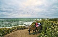 The Smooch (msuner48) Tags: ocean sea sky plants pelicans birds bench flying couple rocks flock cliffs pacificocean cs4 d600 topazlabs niksoftware acr5 nikon1635mmf4