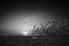 _MG_6460 (Nixson K) Tags: love beach nature sunrise canon photography marinabeach chennai nammachennai canon600d mychennai natgeoshots natgeoindia