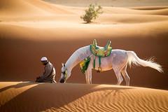 A prayer for peace (Geo Moretti) Tags: light horses art nature animals sunrise dubai desert egypt adventure arabian arabianhorse
