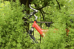 broken bike 147/365 (#christopher#) Tags: bike clever overgrow